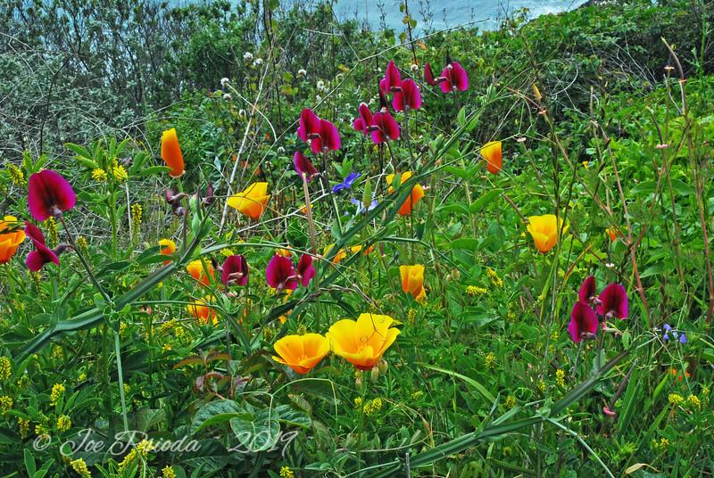 California Coastline Flowers