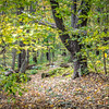 Laural Highlands Autumn Leaves