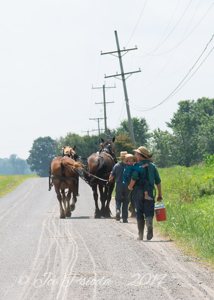 Amish Men and Plow Horses