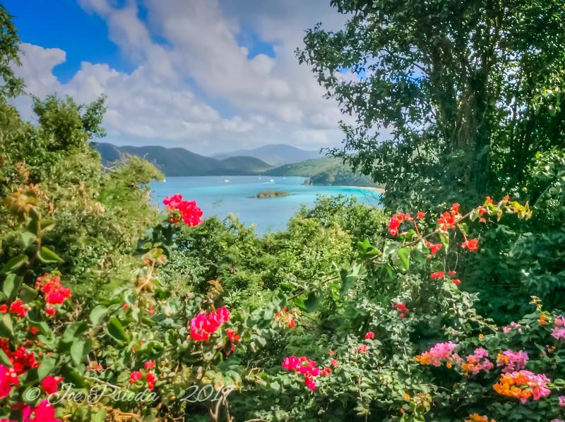Flowers Overlook the Bay