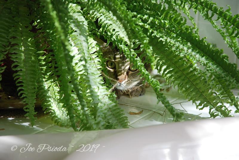 Sammy the Cat Hides in Ferns
