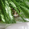 Sammy the Cat Hides in Ferns