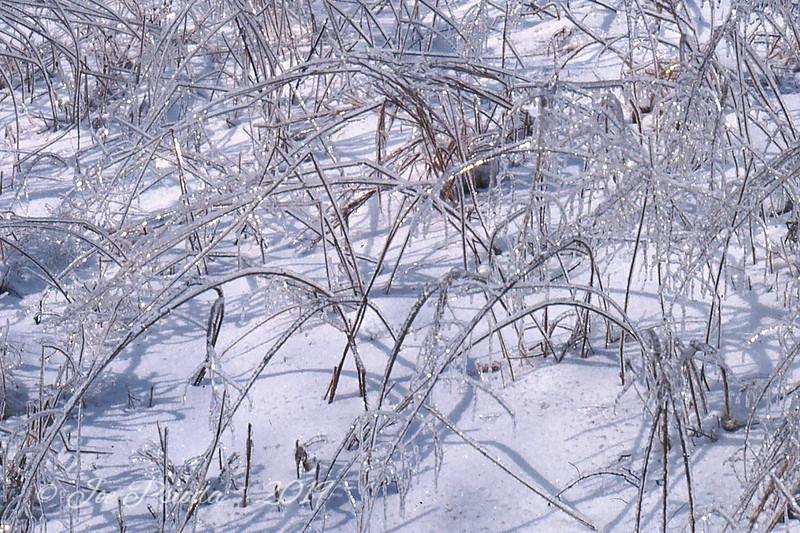 Ice Storm Pocantico