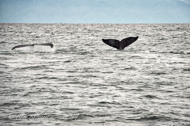 Humpback Whales in Mexican Waters