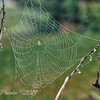 Dew Decorated Spider Web