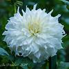 Buchart Blossom