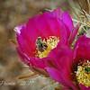 Bee & Pollen Decorated Desert Flowers