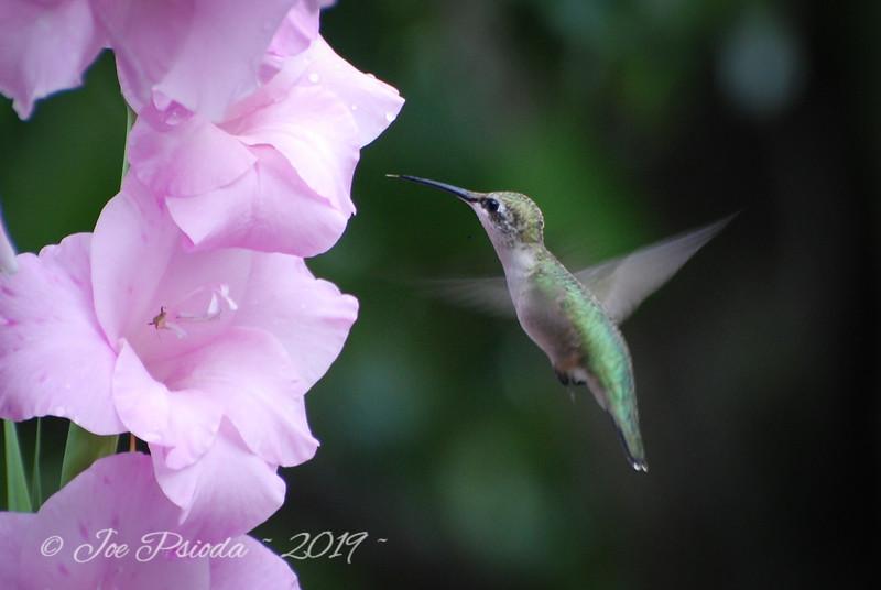 Hummingbird Visit