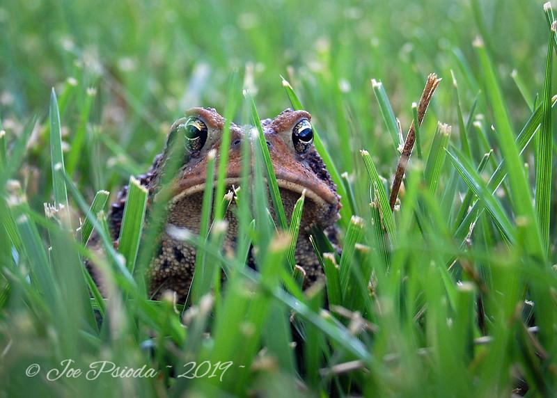 Pouting Frog