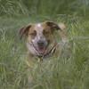 Hapa & Joey 2009 065