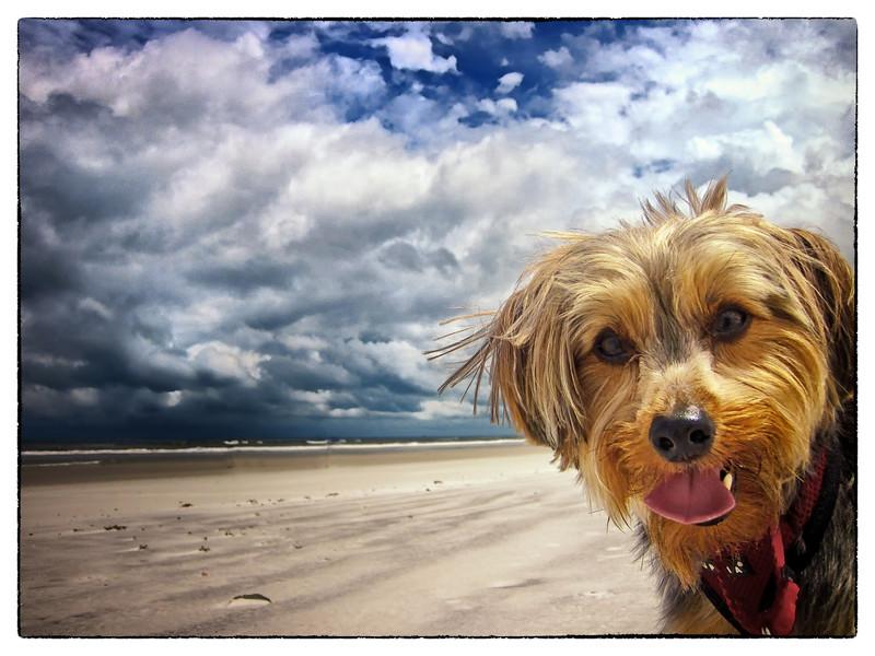 "Joey says ""HI! Isn't the beach great?!"""
