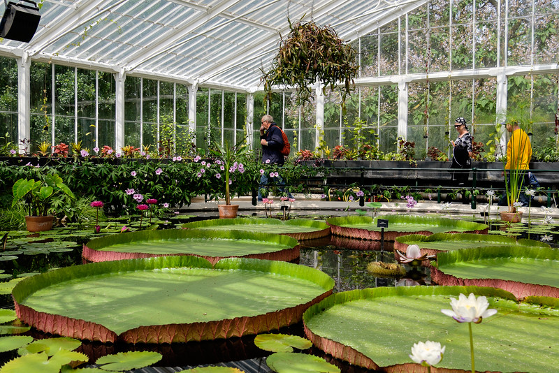 The Waterlily House