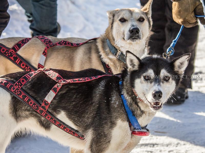 2016 John Beargrease Sled Dog Marathon