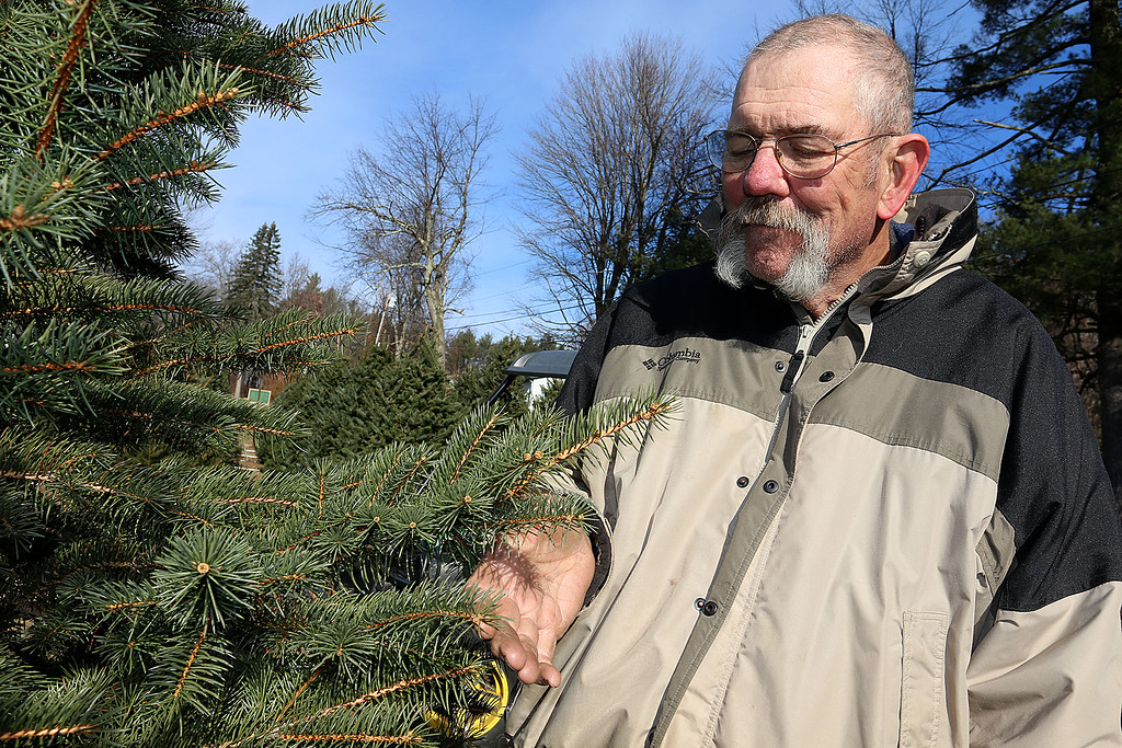 . John Hussey the owner of John Hussey\'s Christmas tree farm in Townsend talks about the blue spruce trees he has on his farm for sale this year. SUN/JOHN LOVE