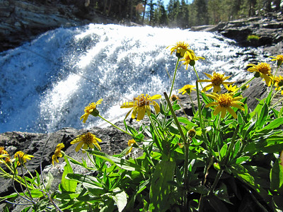 """These are what we call """"Evolution Falls.""""  This is Evolution Creek which runs through McClure Meadow."""