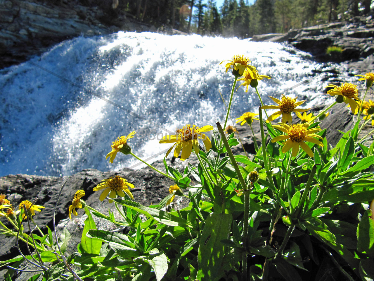 "These are what we call ""Evolution Falls.""  This is Evolution Creek which runs through McClure Meadow."