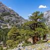 Kings Canyon 9-8-17_MG_4375