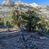 Muir Trail Ranch Jct 9-8-17_MG_4327