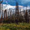 Trail fire damage 8-30-17_MG_3565