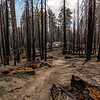 Trail fire damage 8=30-17_MG_3564