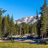 Lyell Canyon-Tuolumne River 9-1-17_MG_3728