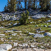 Deer near Donohue Pass 9-2-17_MG_3866