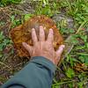 Mushroom at Tully Hole 9-5-17P1020294