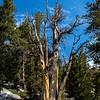 Trail photo north of Purple Lake 9-5-17_MG_4122