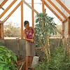 Nicole trims off the dead leaves from the kale plant in John's greenhouse.