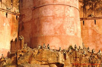 Rajasthan Fort 2