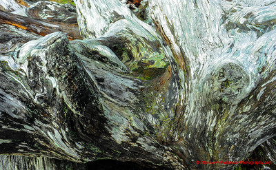 Wahington Coastal Beached Tree