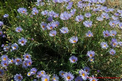 Northwest Wild Flowers 1