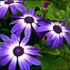 Oregon Flowers - 1