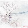Winter Shadows - 1