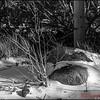 Winter Shadows - 2