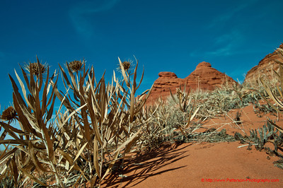 Coyote Buttes 29