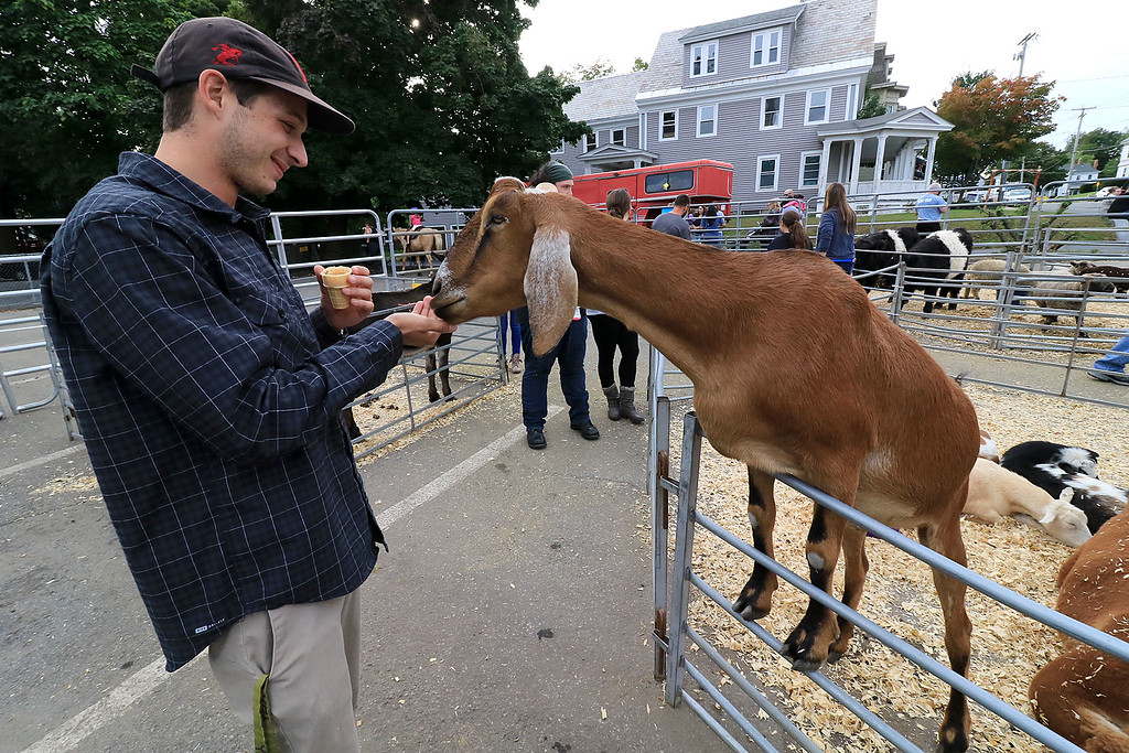 . The 25th anniversary of the Johnny Appleseed Festival was held on Saturday in downtown Leominster, September 22, 2018. Michael Lamanna, 23, from Lunenburg feeds a goat at the festival. SENTINEL & ENTERPRISE/JOHN LOVE