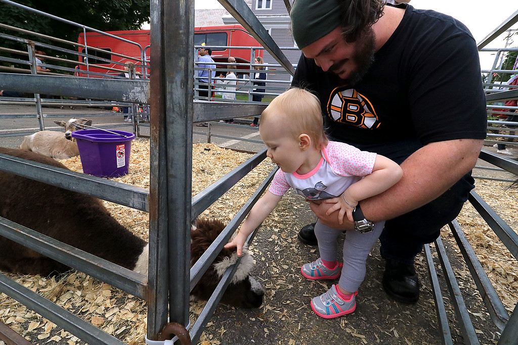 . The 25th anniversary of the Johnny Appleseed Festival was held on Saturday in downtown Leominster, September 22, 2018. Zack Burchell and his daughter Aubrey Burchell, 1, enjoy petting a llama at the festival. SENTINEL & ENTERPRISE/JOHN LOVE