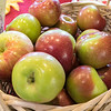 It was Johnny Appleseed's birthday today Thursday, September 26, 2019. He is 245 years old today. The Johnny Appleseed Visitor Center on Route 2 in Lancaster held a birthday party for him. Yes they had some free apples to give out during the party. SENTINEL & ENTERPRISE/JOHN LOVE