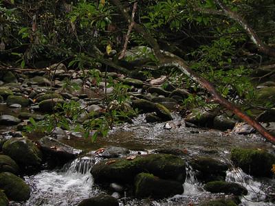 The creek.