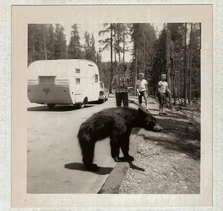 Yellowstone - OMG!