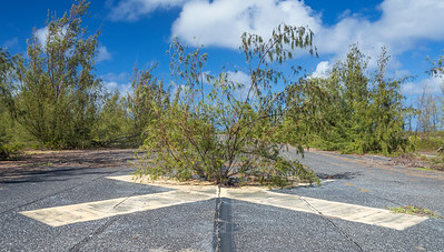 Tree in the Taxiway