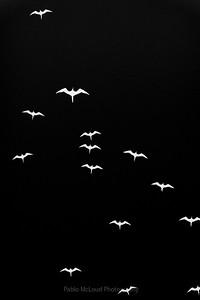 Frigate Swarm