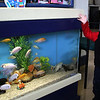 Lynn, Ma. 9-18-17. Lucas Hernandez at the fish tank at the Joi Child Care Center in Lynn.