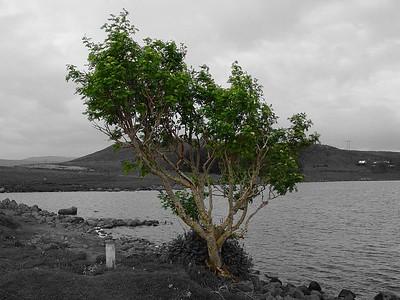 Hérna var maður að æfa sig aðeins í Photoshop.  Myndin var annars tekin við Reynisvatn.