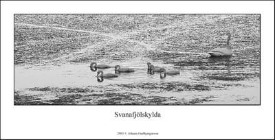 Prófaði að setja ramma utanum svanamyndina, og spurning að prenta þessa mynd á tvö A4 blöð og hengja upp á vegg.