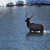 Elk Crossing Cle Elum River