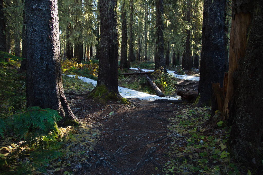 Autumn Trail, Alpine Lakes Wilderness