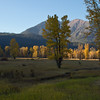 Autumn along the Cle Elum River