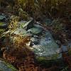 Trailside Still Life with Rocks